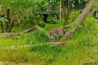 зоопарк в Коркеасаари