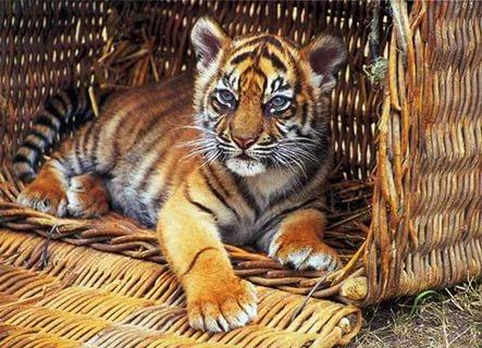 Петербургский зоопарк