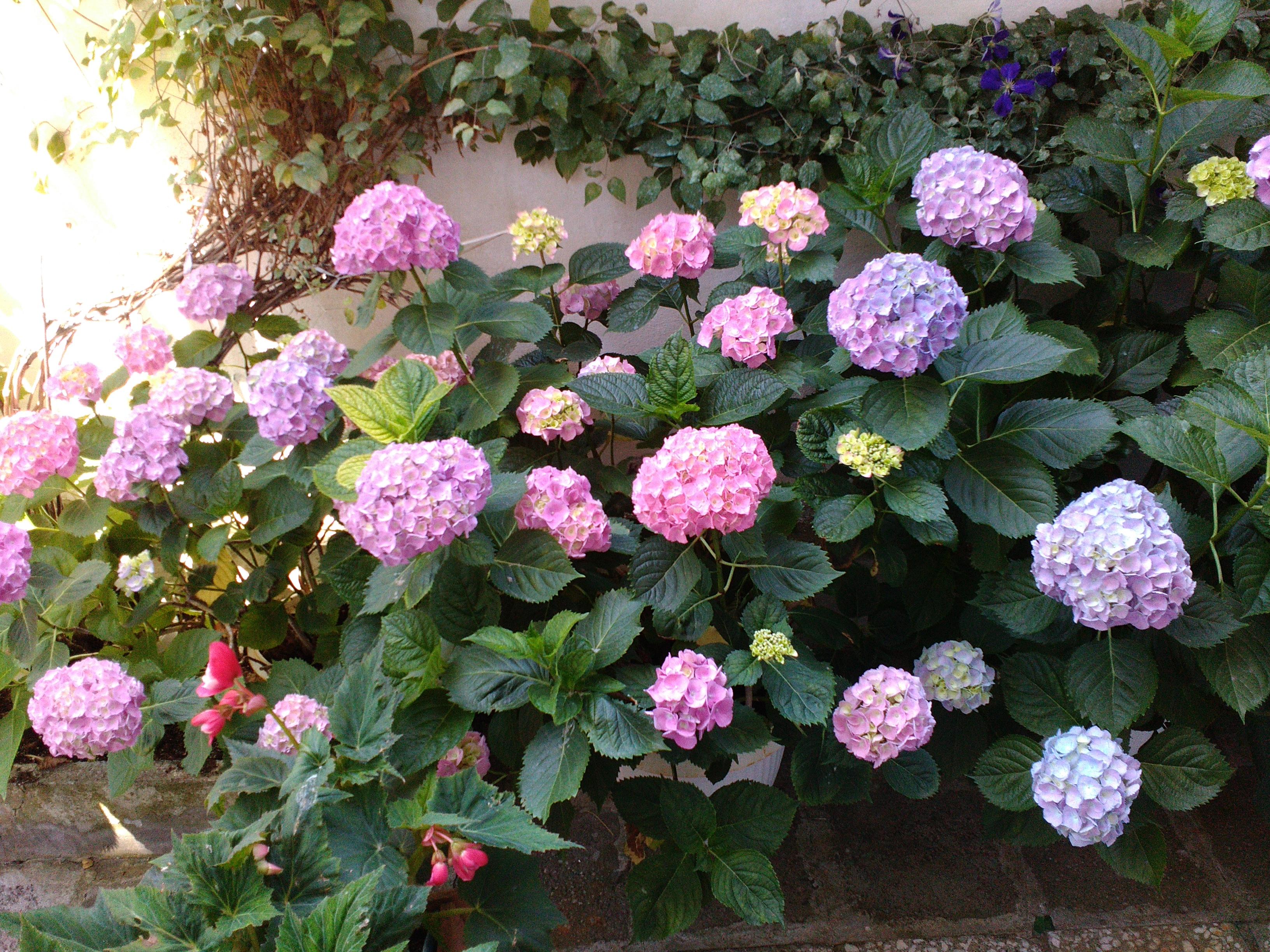 Цветы в Болгарии