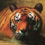Тигр! Тигр!