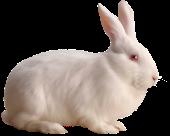 Книги о кроликах