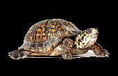 Книги о черепахах